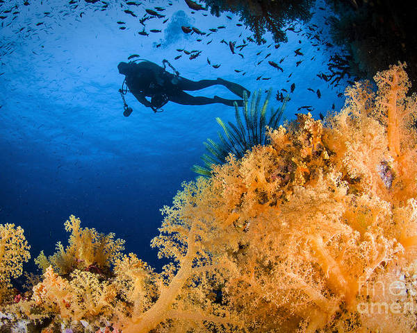 Crinoid Poster featuring the photograph Diver Swimms Above Soft Coral, Fiji by Todd Winner