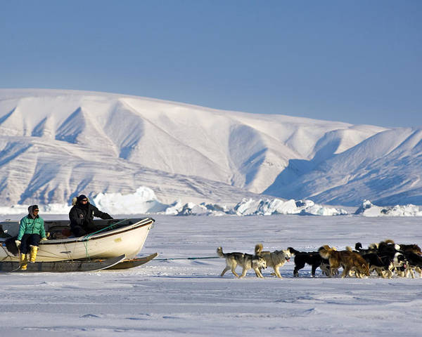 Human Poster featuring the photograph Dog Sled, Qaanaaq, Greenland by Louise Murray