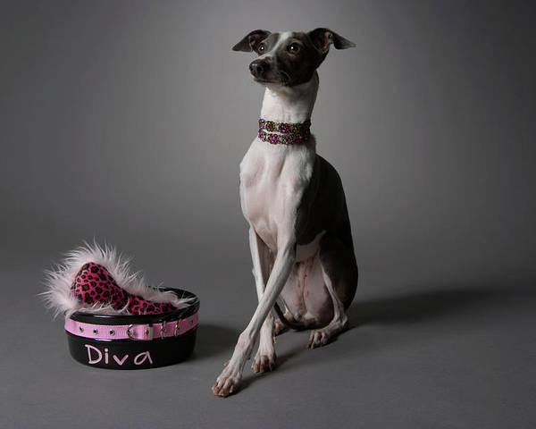 Horizontal Poster featuring the photograph Dog With Diva Bowl by Chris Amaral