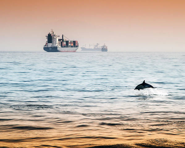 Sea Poster featuring the pyrography Dolphing Playing In The Sunset by Stephen McCluskey