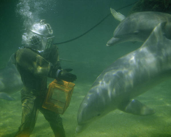 Color Image Poster featuring the photograph Dolphins Hover Near A Diver Holding An by Luis Marden