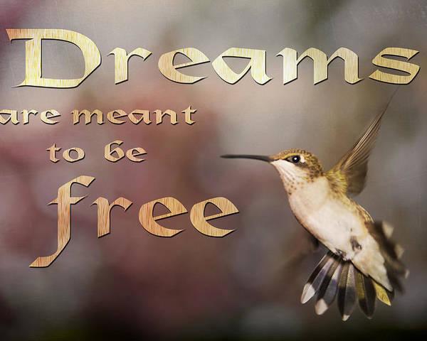 Hummingbird Poster featuring the photograph Dreams by Gwen Vann-Horn