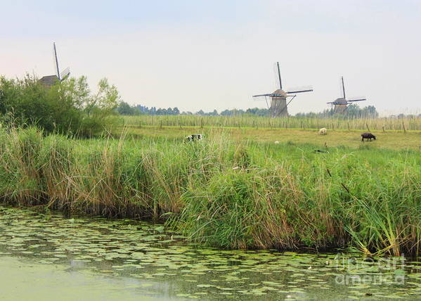 Dutch Landscape Poster featuring the photograph Dutch Landscape With Windmills And Cows by Carol Groenen