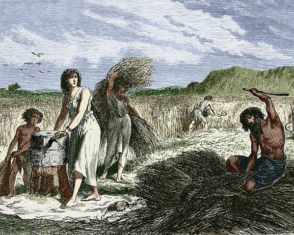 Wheat Poster featuring the photograph Early Humans Harvesting Crops by Sheila Terry
