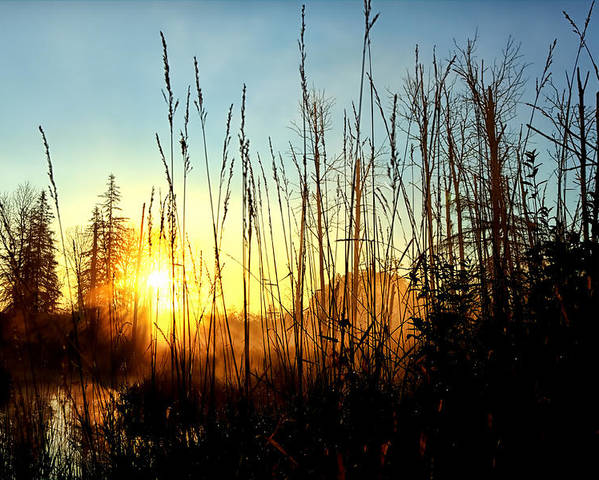 Sunrise Poster featuring the photograph Early Morning In Maine by Gary Smith