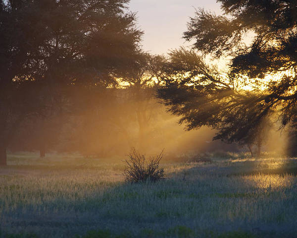 Horizontal Poster featuring the photograph Early Morning Sun Beams Through Branches Of A Tree by Heinrich van den Berg