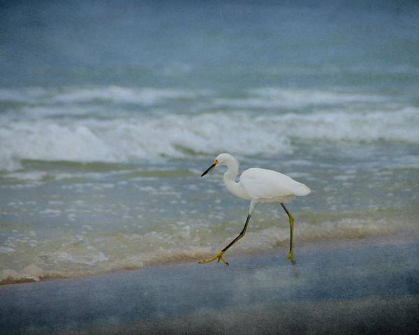 Bird Poster featuring the photograph Egret by Sandy Keeton