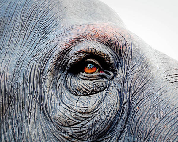 Horizontal Poster featuring the photograph Elephant Eye by Selvin