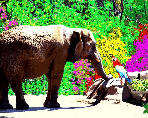 Elephant Poster featuring the photograph Elephant-parrot Dialogue by Rom Galicia