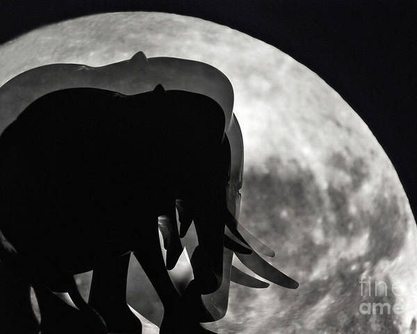 Photography Poster featuring the photograph Elephants On Moonlight Walk by Kaye Menner