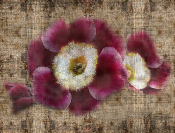 Primroses Poster featuring the photograph English Primrose by Barbara White