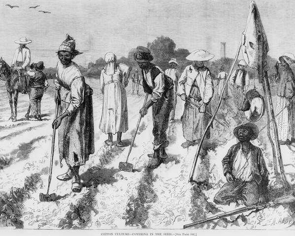 History Poster featuring the photograph Ex-slaves, Working In A Gang by Everett