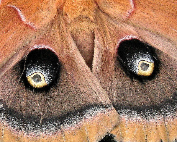 Nature Poster featuring the photograph Eyes Of Deception by Peg Urban