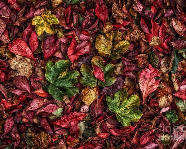 Autumn Poster featuring the photograph Fall Autumn Leaves by John Farnan