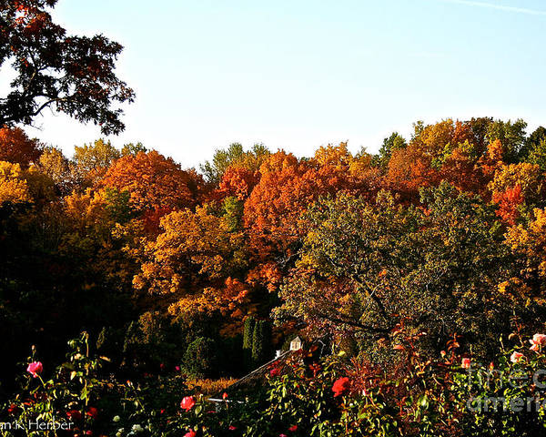 Outdoors Poster featuring the photograph Fall Foliage And Roses by Susan Herber
