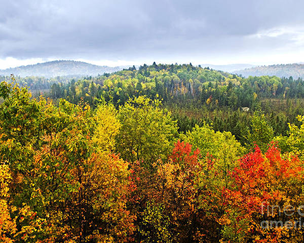 Autumn Poster featuring the photograph Fall Forest by Elena Elisseeva