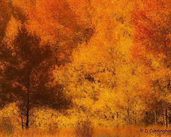 Tetons Poster featuring the photograph Fall Glory by Dorothy Cunningham