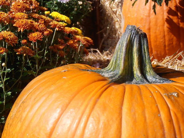 Pumpkin Poster featuring the photograph Fall Pumpkin by Kimberly Perry