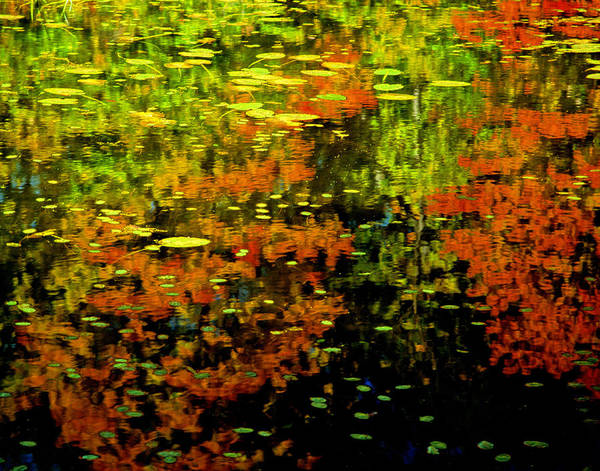 Reflection Poster featuring the photograph Fall Reflections by Carolyn Smith