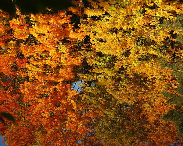Usa Poster featuring the painting Fall Textures In Water by LeeAnn McLaneGoetz McLaneGoetzStudioLLCcom