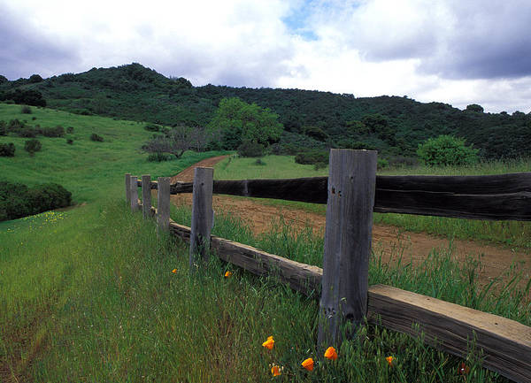 Landscapes Poster featuring the photograph Fence And Poppies by Kathy Yates