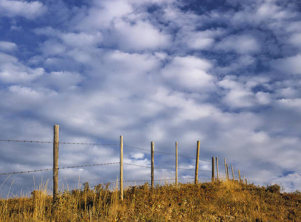 Light Poster featuring the photograph Fenceline In Pasture With Cumulus by Darwin Wiggett