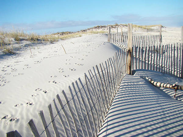 Dunes Poster featuring the photograph Fences Shadows And Sand Dunes by Mother Nature