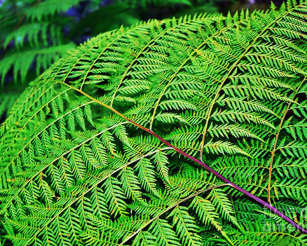 Photography Poster featuring the photograph Fern Frond by Kaye Menner