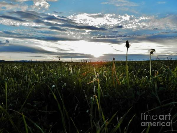 Clouds Poster featuring the photograph Field Of Alfalfa 5 by Tayla Hanson