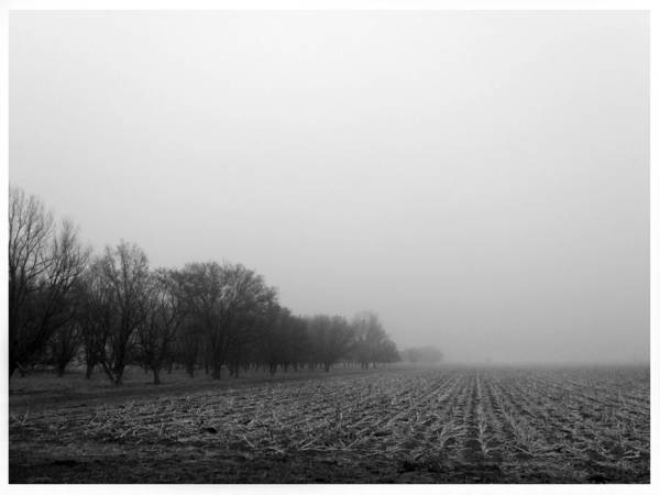 Landscape Poster featuring the photograph Field Of Trees by Chris Kaan