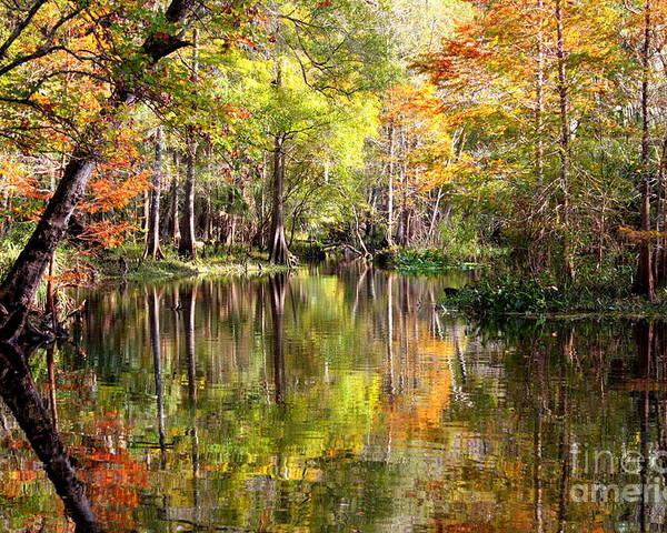 Florida Poster featuring the photograph Florida Autumn Secret by Carol Groenen