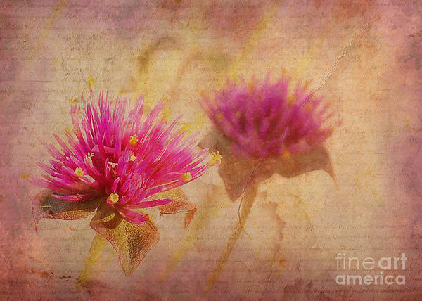 Flowers Poster featuring the photograph Flower Memories by Judi Bagwell