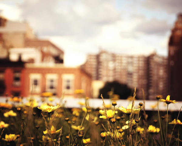 New York City Poster featuring the photograph Flowers - High Line Park - New York City by Vivienne Gucwa