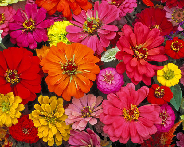 Flowers Poster featuring the photograph Flowers by Larry Landolfi