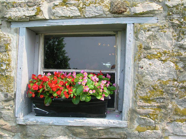 Window Poster featuring the photograph Flowers With A View by Alan Rutherford
