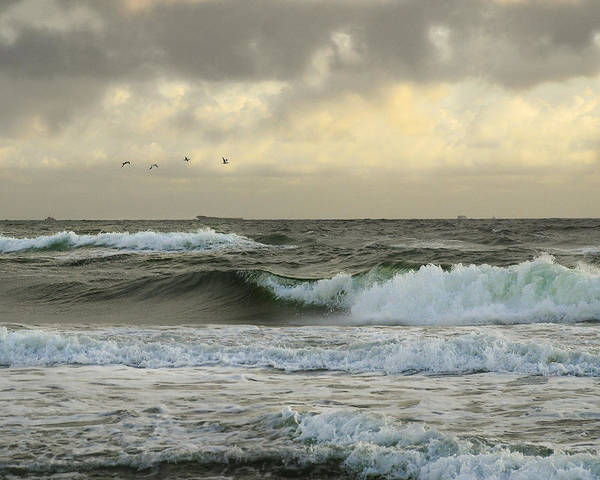 Birds Poster featuring the photograph Flying Over The Waves by Cathy Lee Stokes