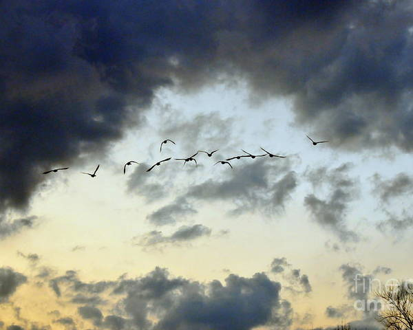 Birds Poster featuring the photograph Flying South For The Winter by Paul Ward