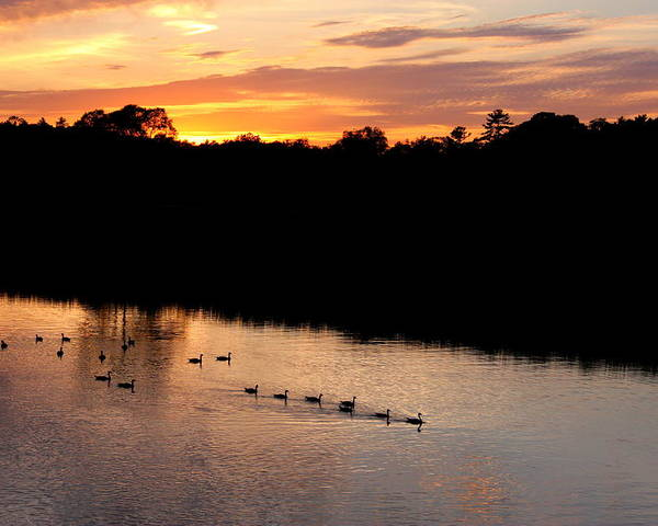 Sunset Poster featuring the photograph Follow The Leader by Philip Neelamegam
