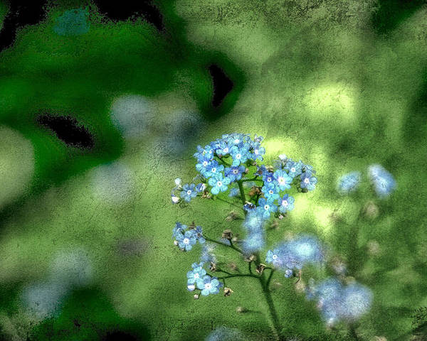 Forget-me-not Poster featuring the photograph Forget-me-not Grunge by Darren Fisher