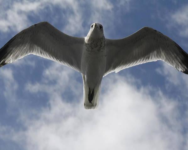 Birds Poster featuring the photograph Freedom by Natalija Wortman