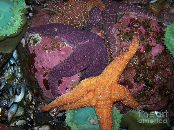Starfish Poster featuring the photograph Friends by Margie Byrne