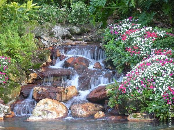 Waterfall Poster featuring the photograph Gardens At Seaworld by Maria Bonnier-Perez