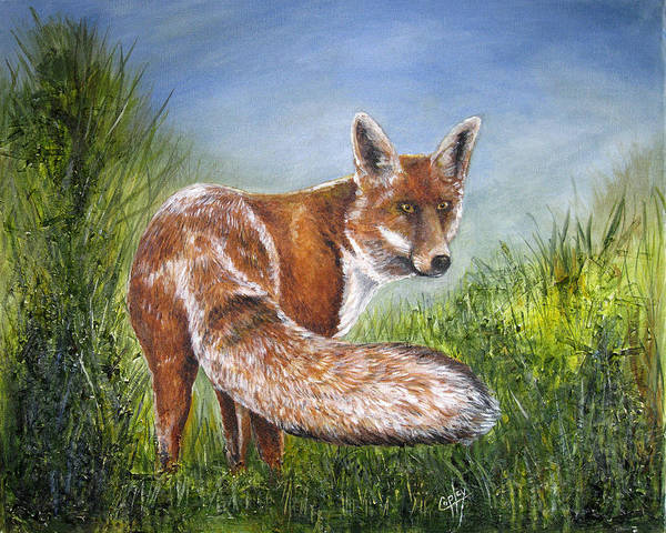Fox Poster featuring the painting Gazing Fox by Karen Copley