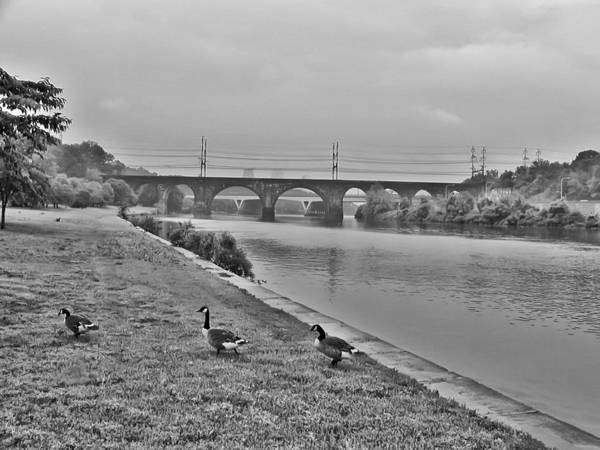 Geese Along The Schuylkill River Poster featuring the photograph Geese Along The Schuylkill River by Bill Cannon