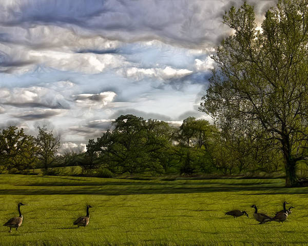 Geese Poster featuring the photograph Geese On Painted Green 2 by Bill Tiepelman
