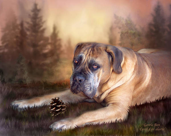 Mastiff Poster featuring the mixed media Gentle Ben by Carol Cavalaris
