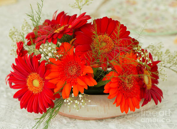 Gerbera Hybrida Poster featuring the photograph Gerbera Daisies by Louise Heusinkveld