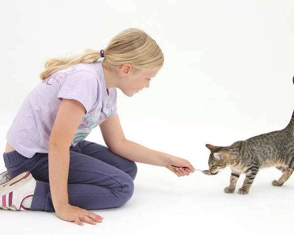 Nature Poster featuring the photograph Girl Feeding Kitten From A Spoon by Mark Taylor