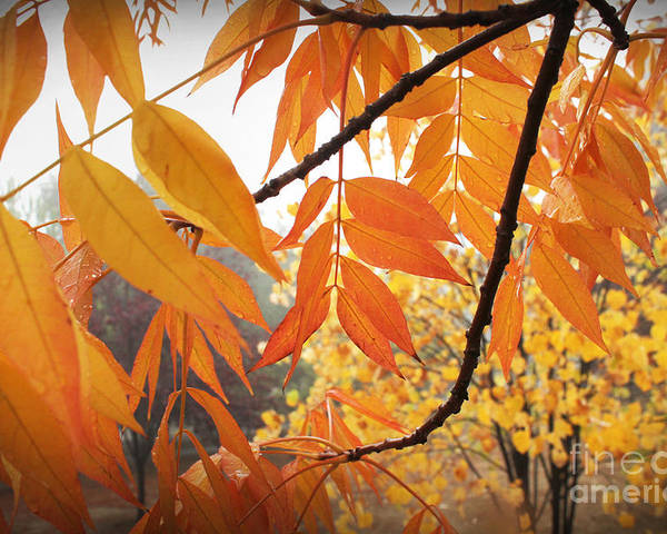 Brilliant Poster featuring the photograph Gold Leaves by Leslie Kinney