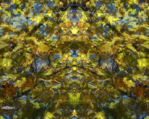 Golden Rorschach Poster featuring the photograph Golden Rorschach by Seth Weaver